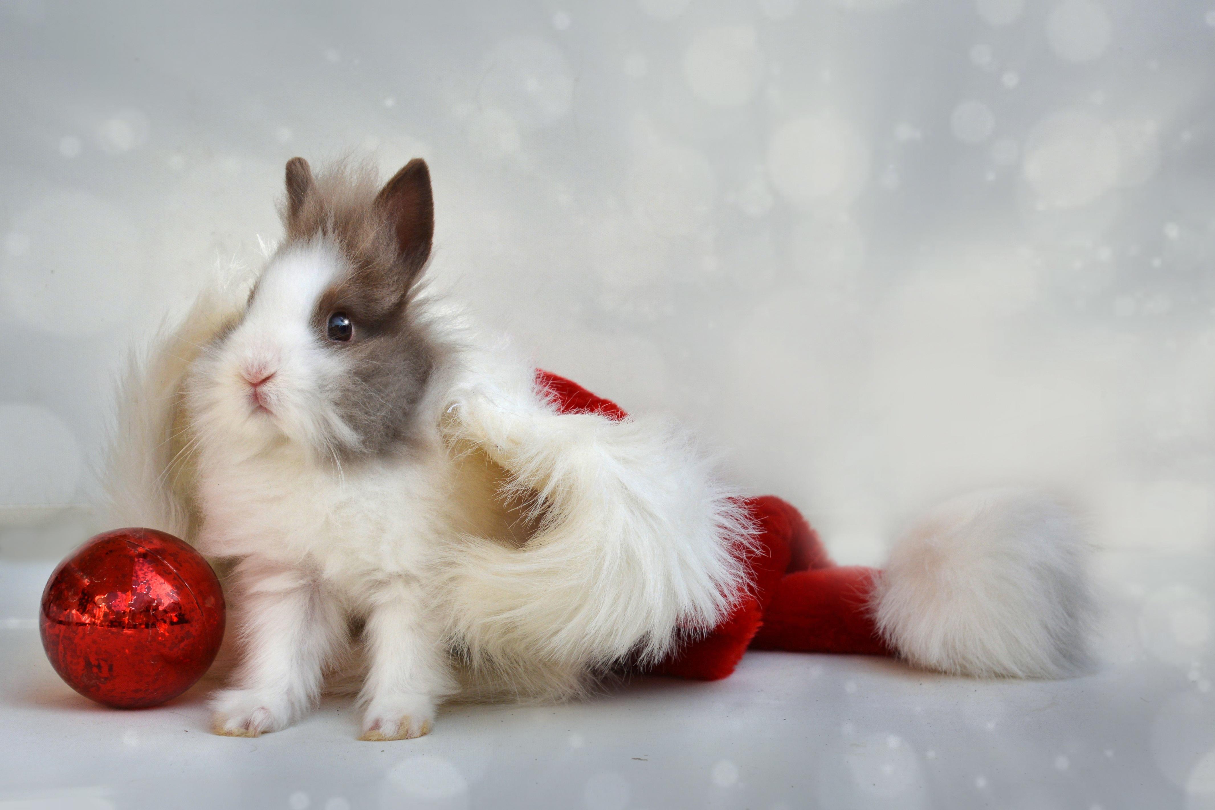 59924 Hintergrundbild herunterladen Feiertage, Kaninchen, Neujahr, Neues Jahr, Ball - Bildschirmschoner und Bilder kostenlos