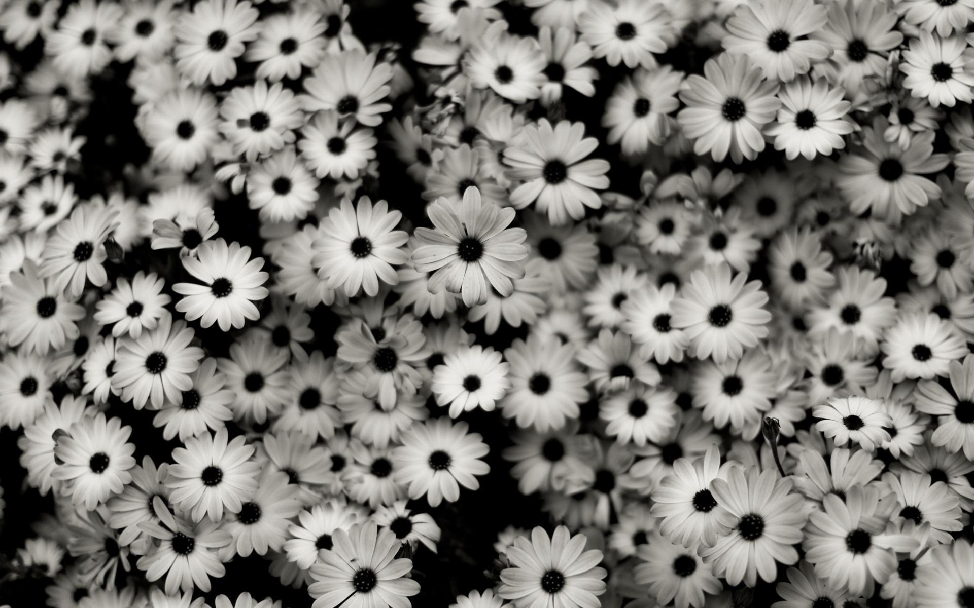 16249 скачать обои Растения, Цветы, Фон - заставки и картинки бесплатно