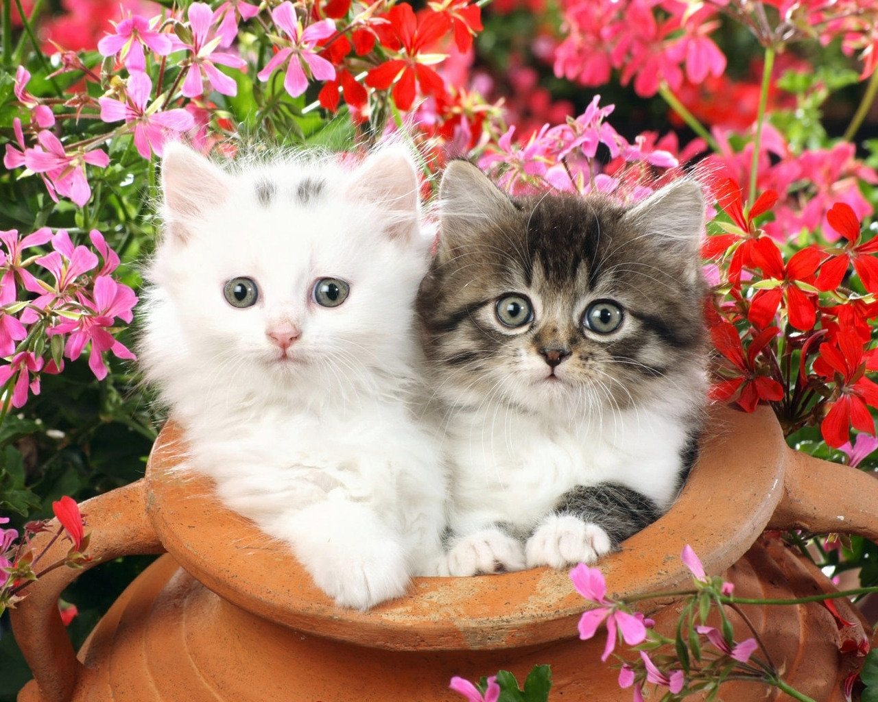 7750 download wallpaper Animals, Cats screensavers and pictures for free