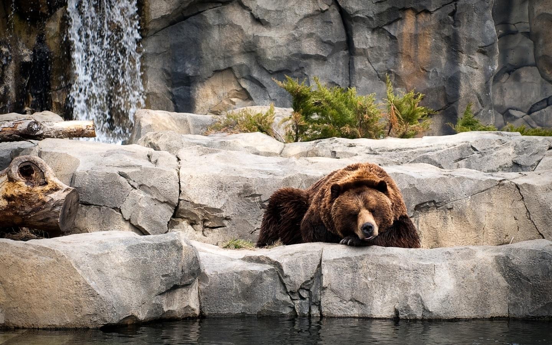 41255 Заставки и Обои Медведи на телефон. Скачать Медведи, Животные картинки бесплатно