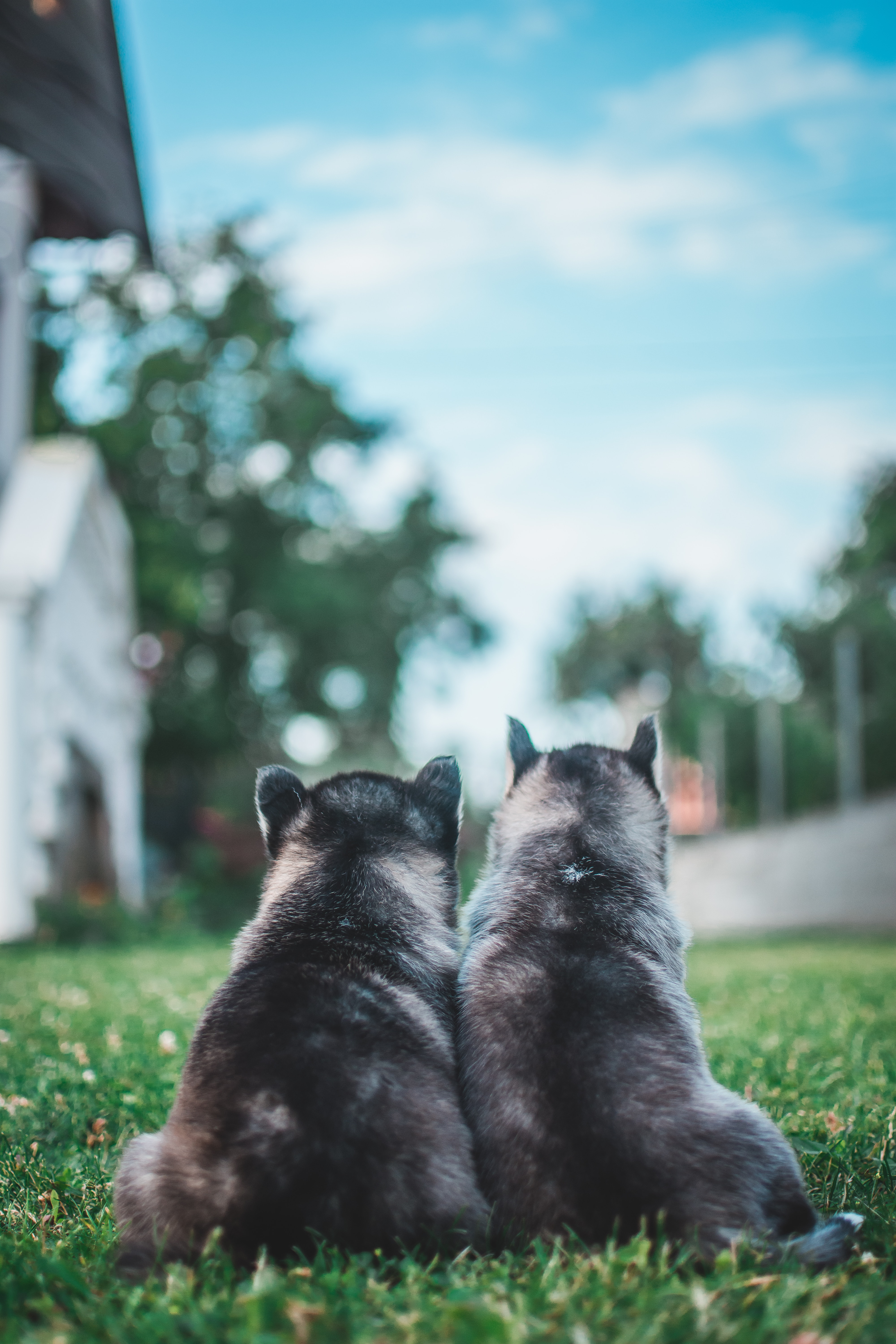 132542 download wallpaper Animals, Puppies, Dogs, Grass, Lawn screensavers and pictures for free