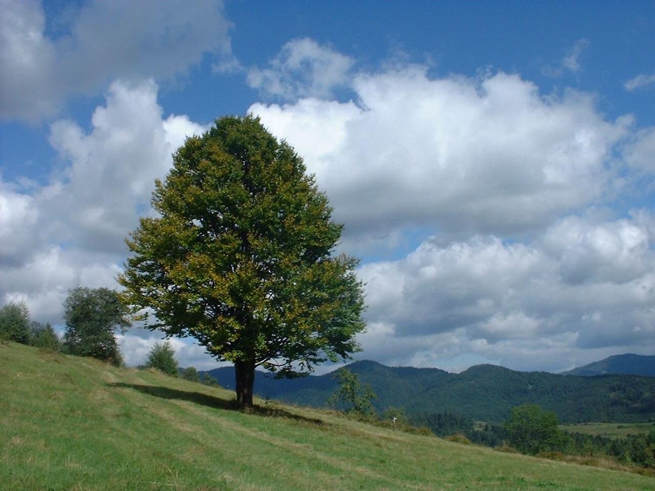 8451 скачать обои Пейзаж, Деревья - заставки и картинки бесплатно
