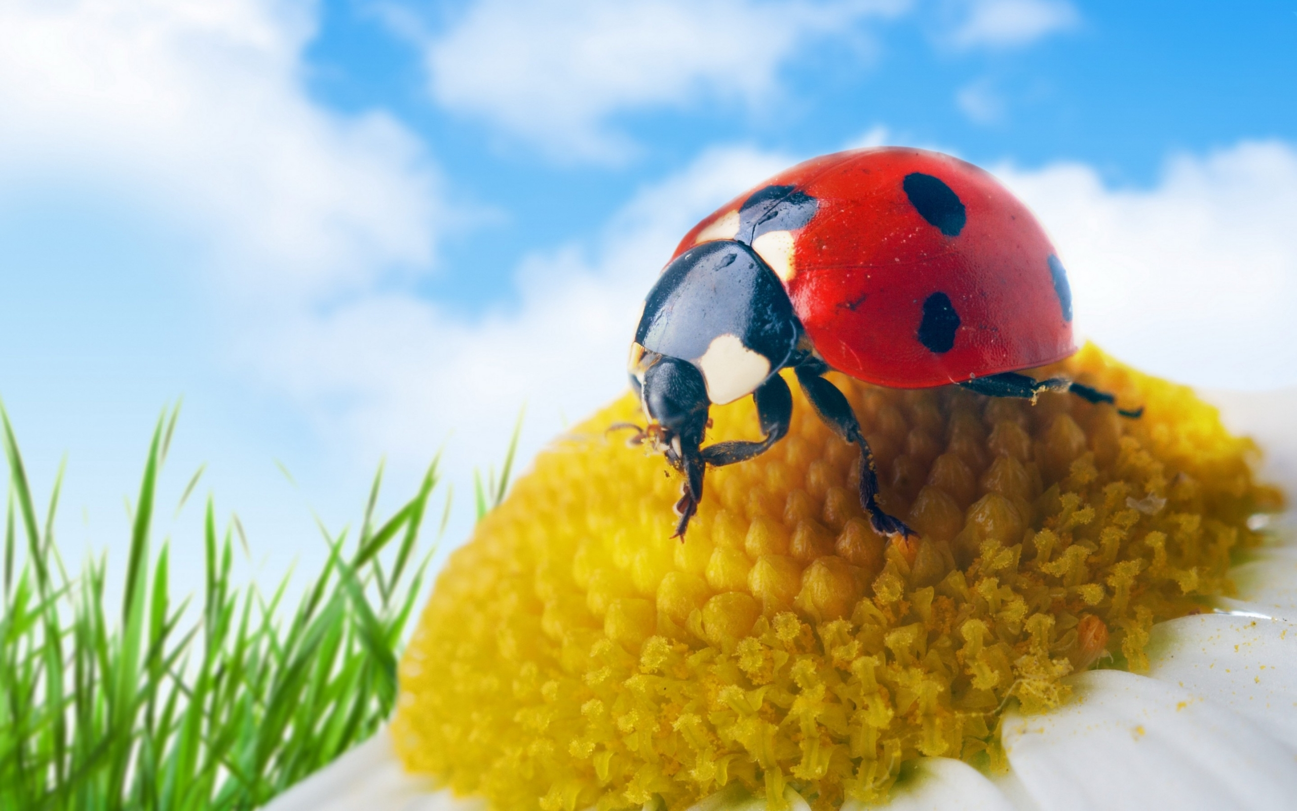 30170 download wallpaper Insects, Ladybugs screensavers and pictures for free