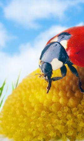 30170 Salvapantallas y fondos de pantalla Insectos en tu teléfono. Descarga imágenes de Insectos, Mariquitas gratis