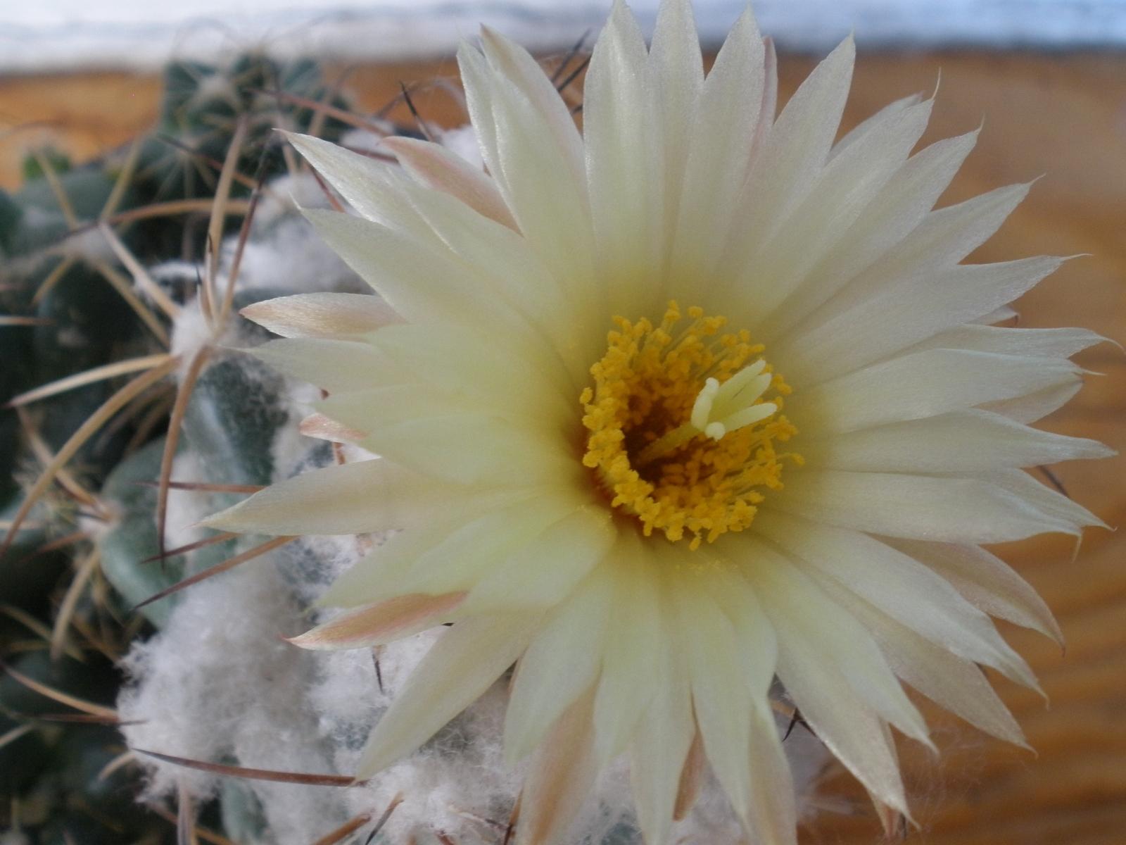 5431 скачать обои Растения, Цветы - заставки и картинки бесплатно