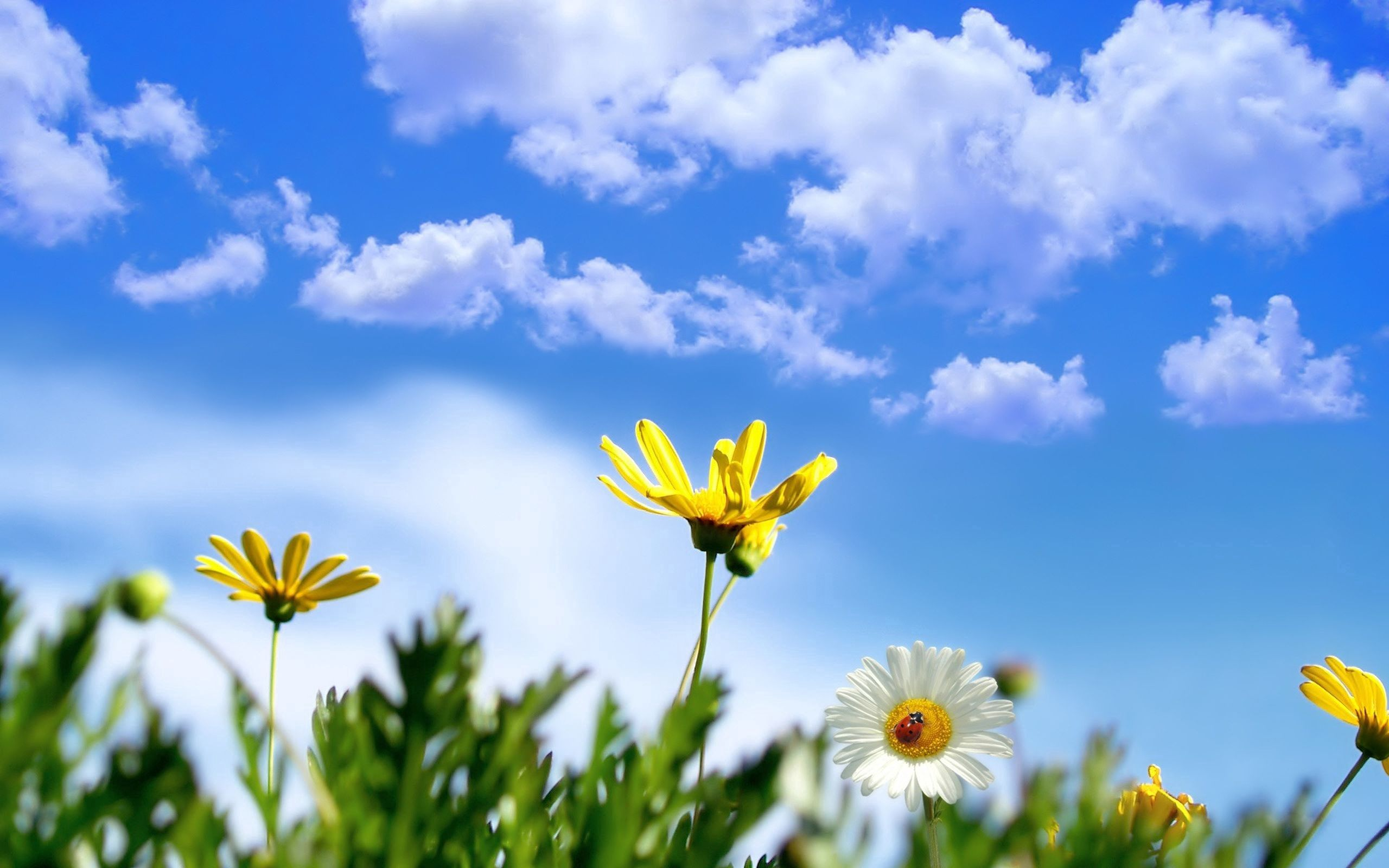 117192 Hintergrundbild herunterladen Natur, Sky, Clouds, Marienkäfer, Blume, Ladybird - Bildschirmschoner und Bilder kostenlos