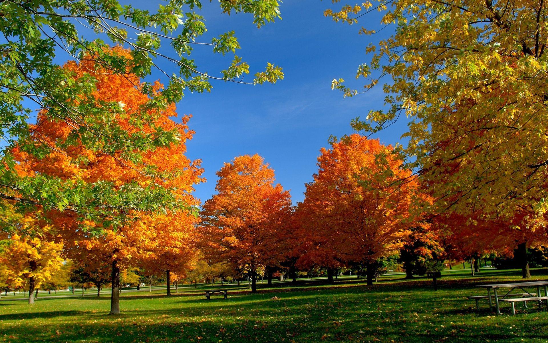100477 завантажити шпалери Осінь, Природа, Листя, Дерева, Трава, Парк - заставки і картинки безкоштовно