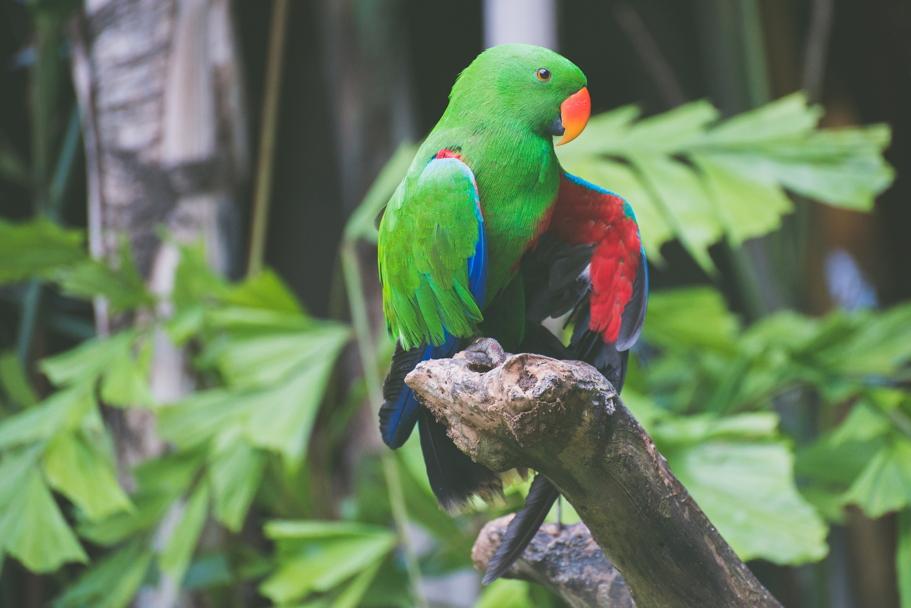 109853 download wallpaper Animals, Parrots, Color, Birds screensavers and pictures for free