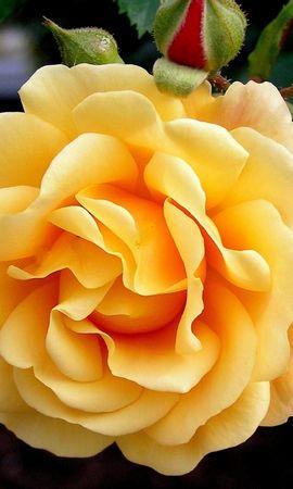 41685 descargar fondo de pantalla Plantas, Flores: protectores de pantalla e imágenes gratis