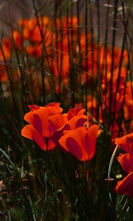 38288 скачать обои Растения, Цветы - заставки и картинки бесплатно