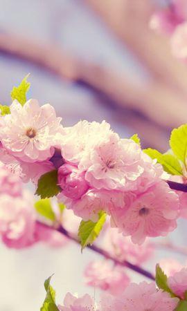 21958 скачать обои Растения, Цветы, Деревья - заставки и картинки бесплатно