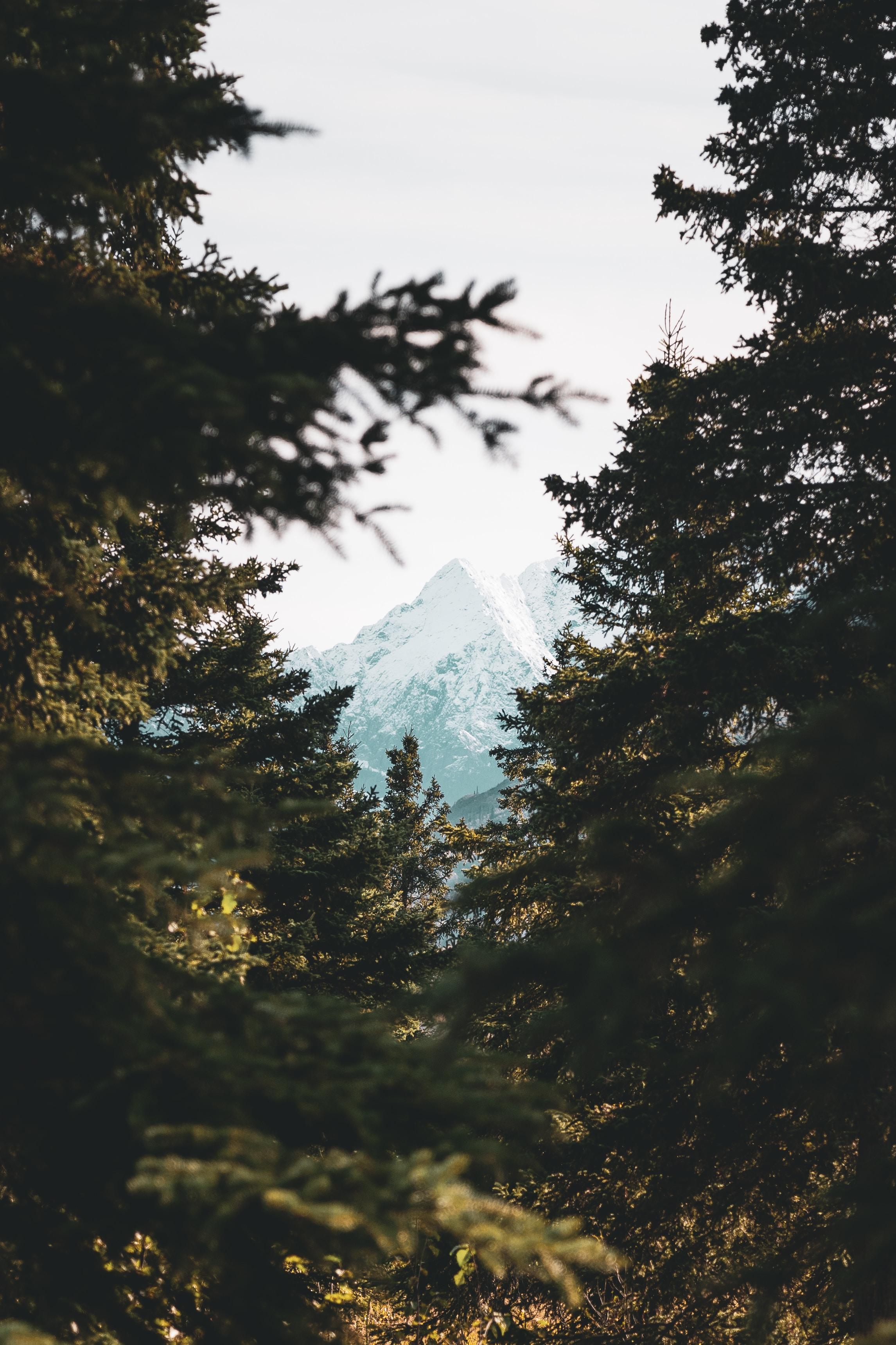 103860 скачать обои Природа, Деревья, Гора, Вершина, Лес, Сосны - заставки и картинки бесплатно