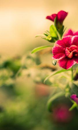 16172 descargar fondo de pantalla Plantas, Flores: protectores de pantalla e imágenes gratis