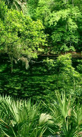 26431 скачать обои Пейзаж, Река, Деревья - заставки и картинки бесплатно