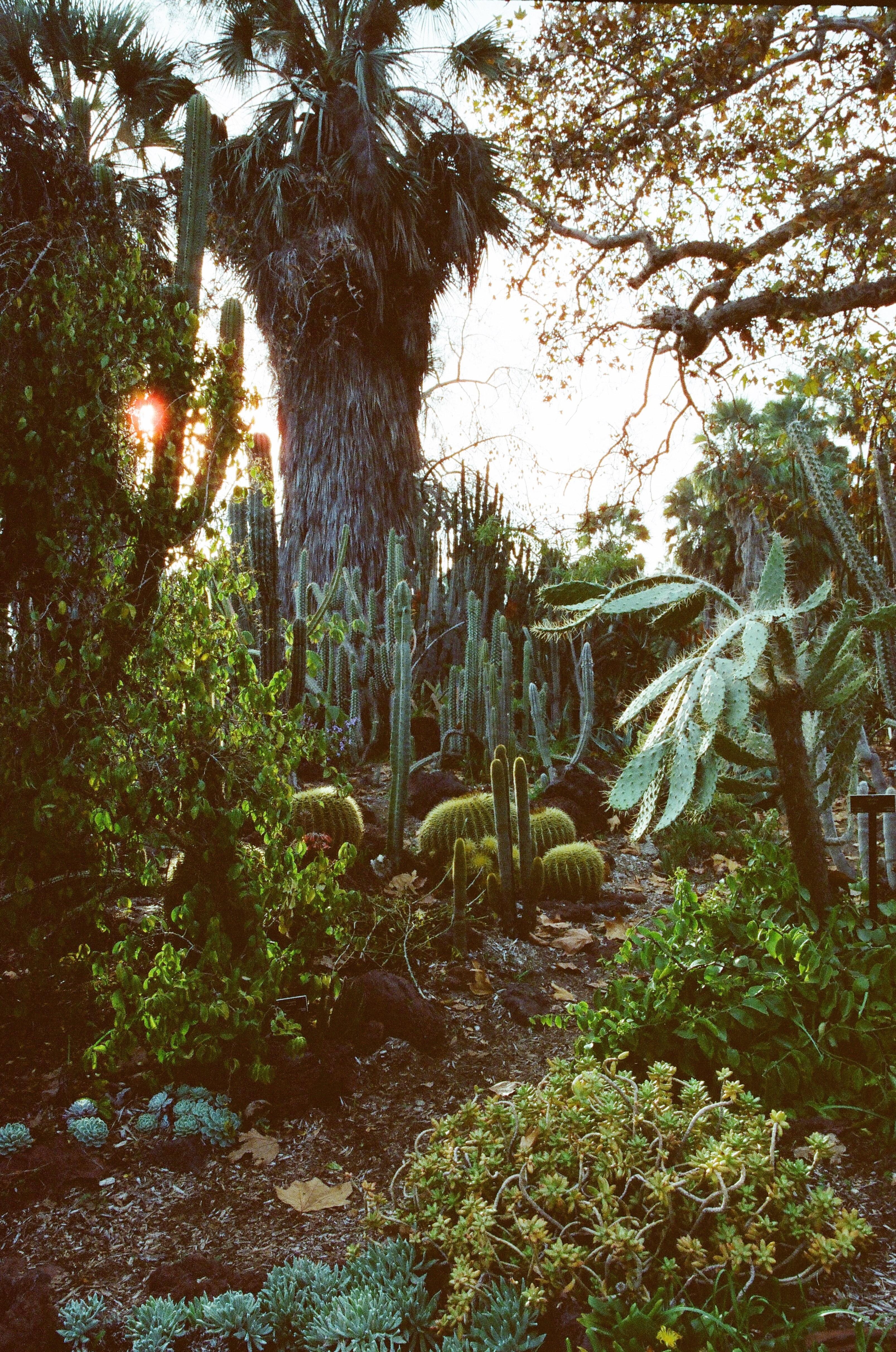 64108 Hintergrundbild herunterladen Pflanzen, Natur, Kakteen, Palms, Garten, Arboretum - Bildschirmschoner und Bilder kostenlos