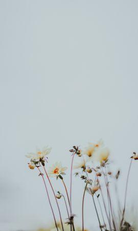50718 descargar fondo de pantalla Flores, Cogollos, Brotes, Florecer, Floración, Plantas, Macro: protectores de pantalla e imágenes gratis