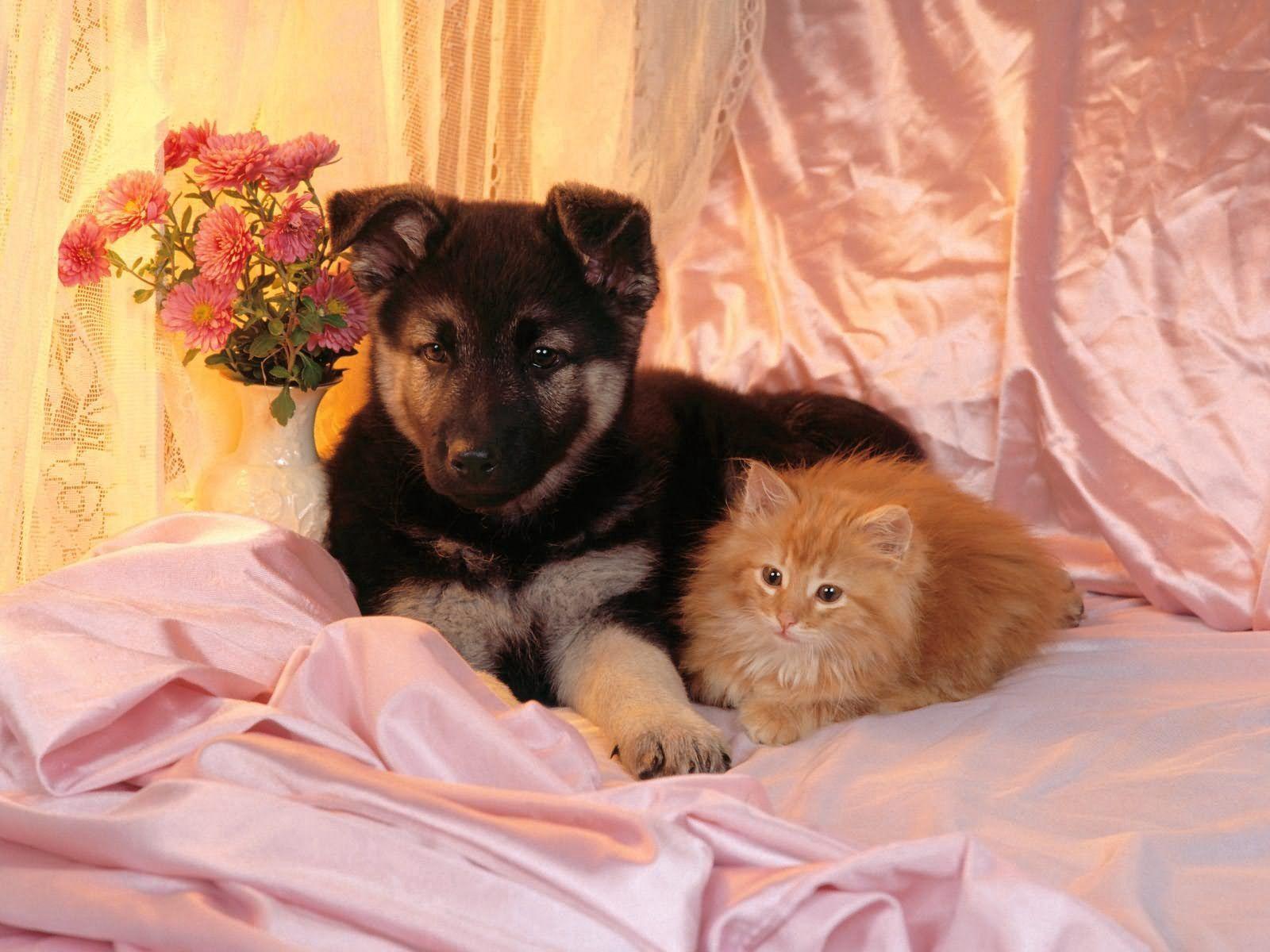 62762 Hintergrundbild 1024x768 kostenlos auf deinem Handy, lade Bilder Tiere, Kätzchen, Paar, Hund, Freunde 1024x768 auf dein Handy herunter