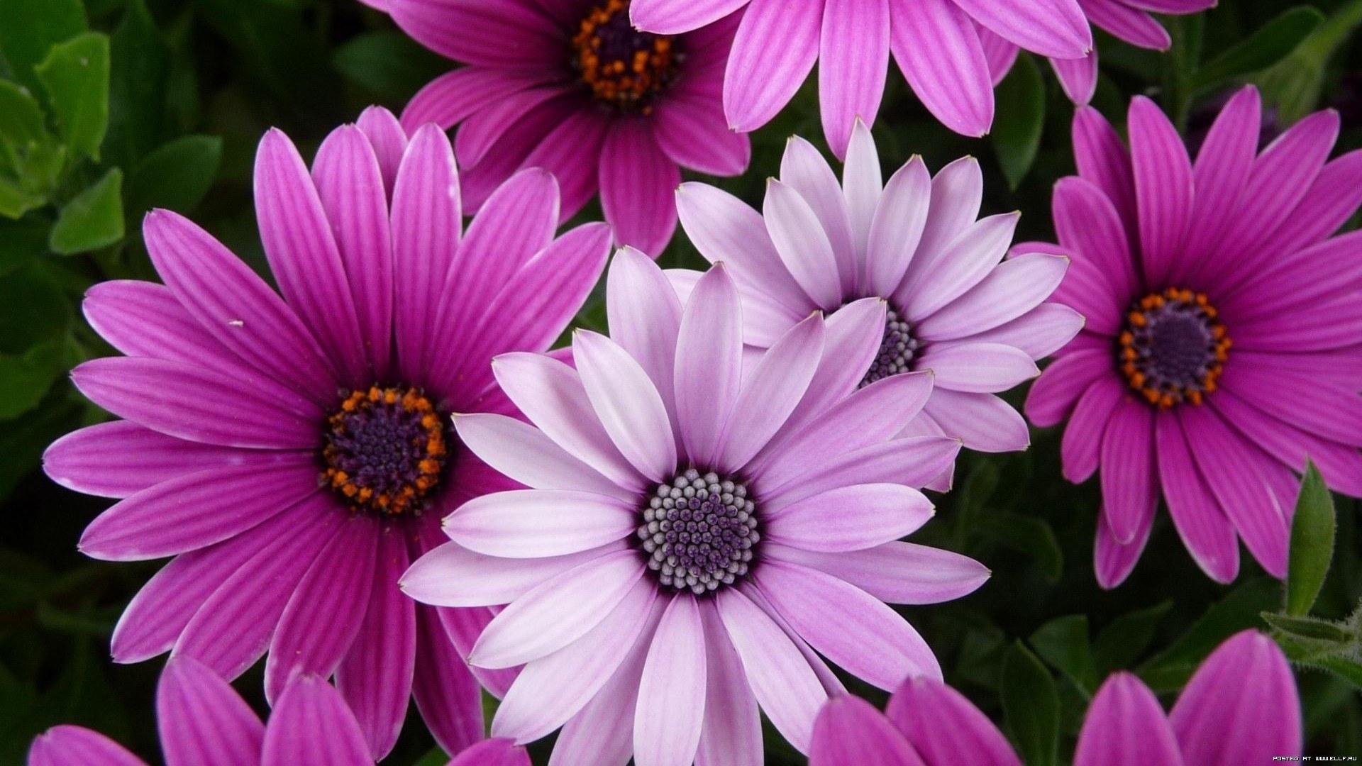 42702 скачать обои Растения, Цветы - заставки и картинки бесплатно