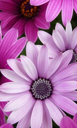 42702 télécharger le fond d'écran Plantes, Fleurs - économiseurs d'écran et images gratuitement