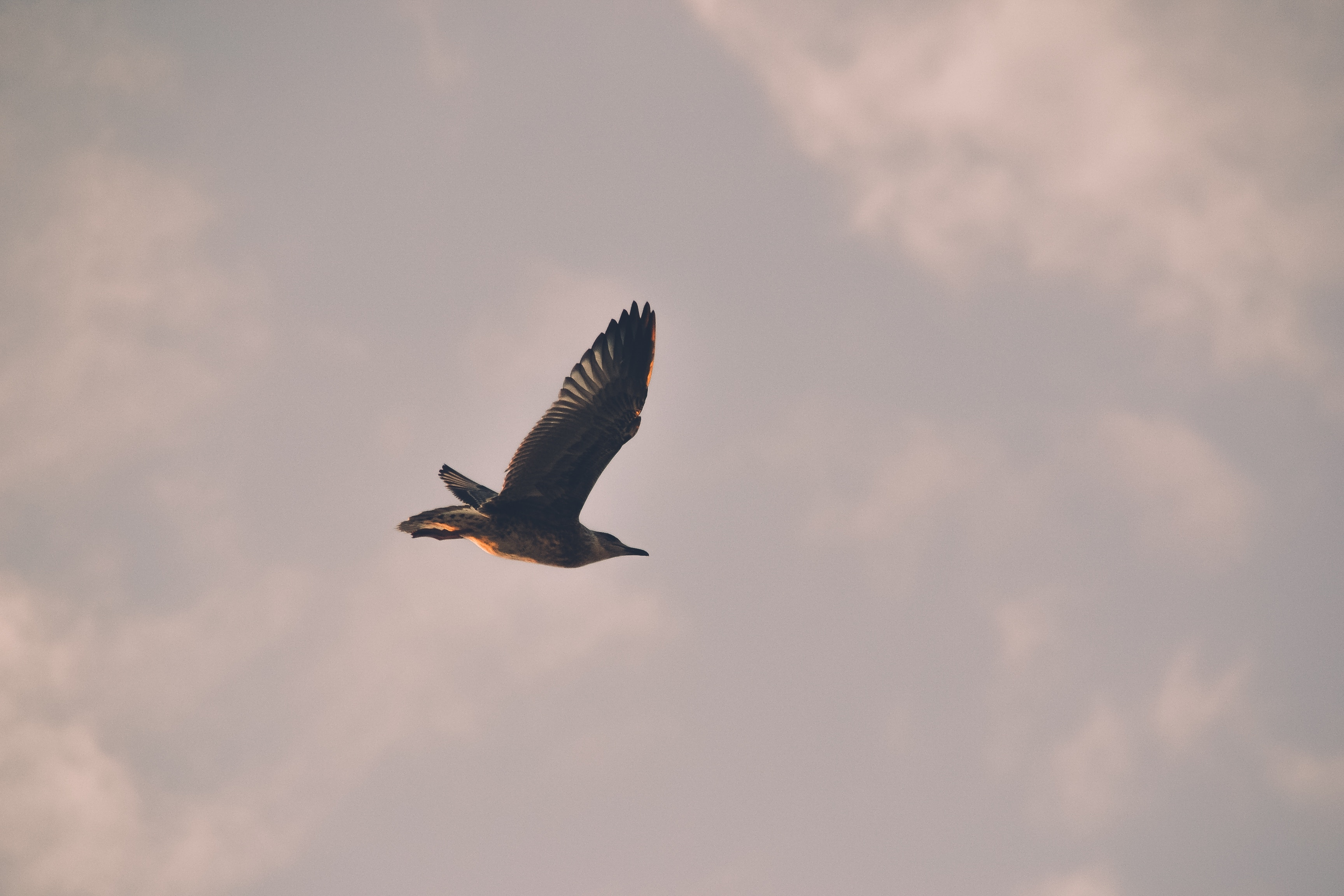 97356 download wallpaper Animals, Bird, Gull, Seagull, Flight, Sky screensavers and pictures for free