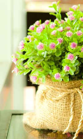 22761 скачать обои Растения, Цветы, Букеты - заставки и картинки бесплатно