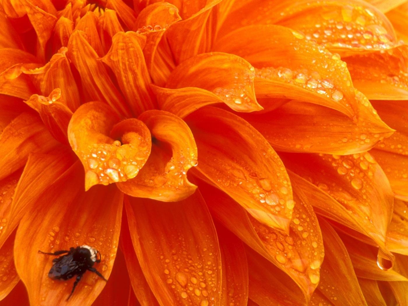 29879 скачать обои Растения, Цветы, Насекомые - заставки и картинки бесплатно