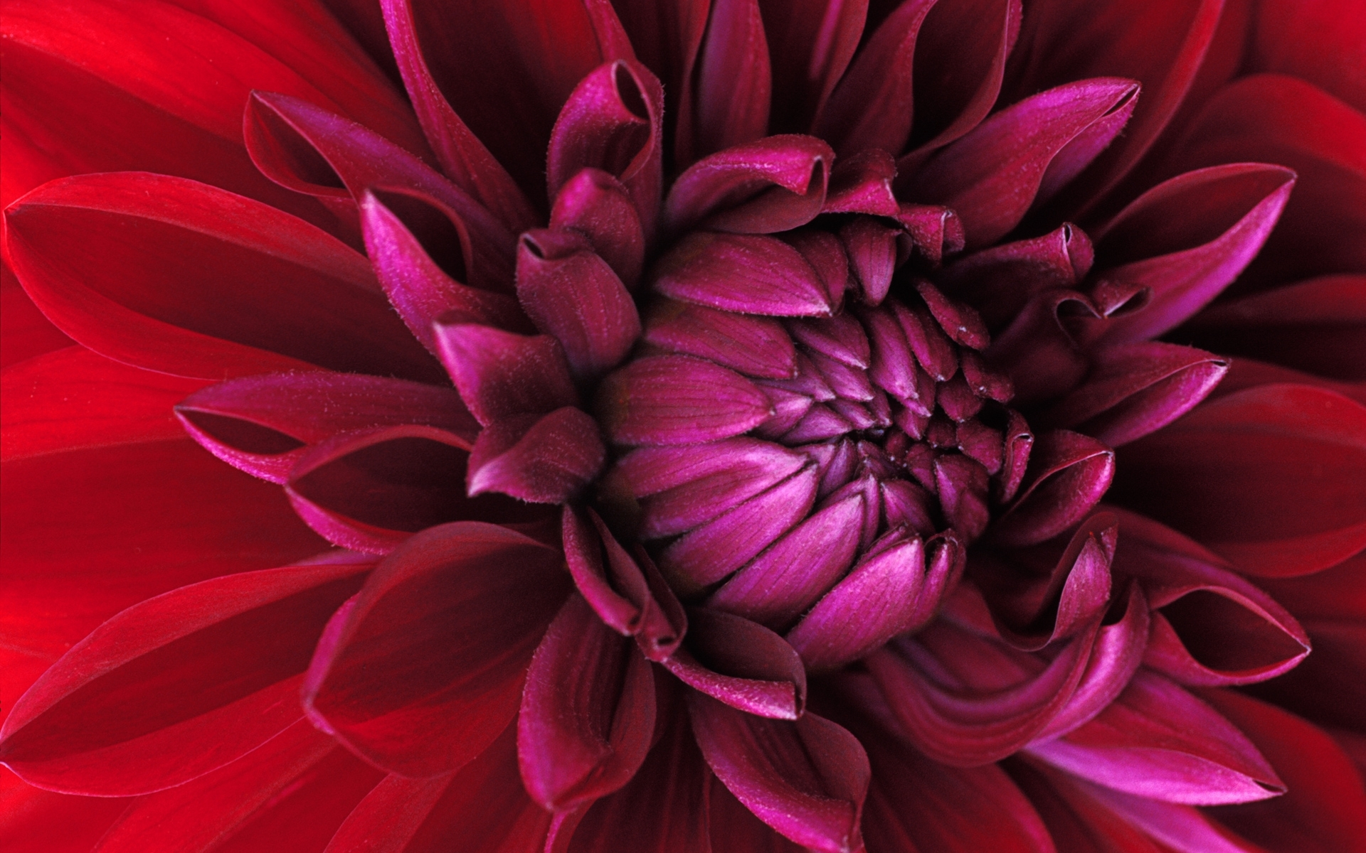 8950 скачать обои Растения, Цветы - заставки и картинки бесплатно