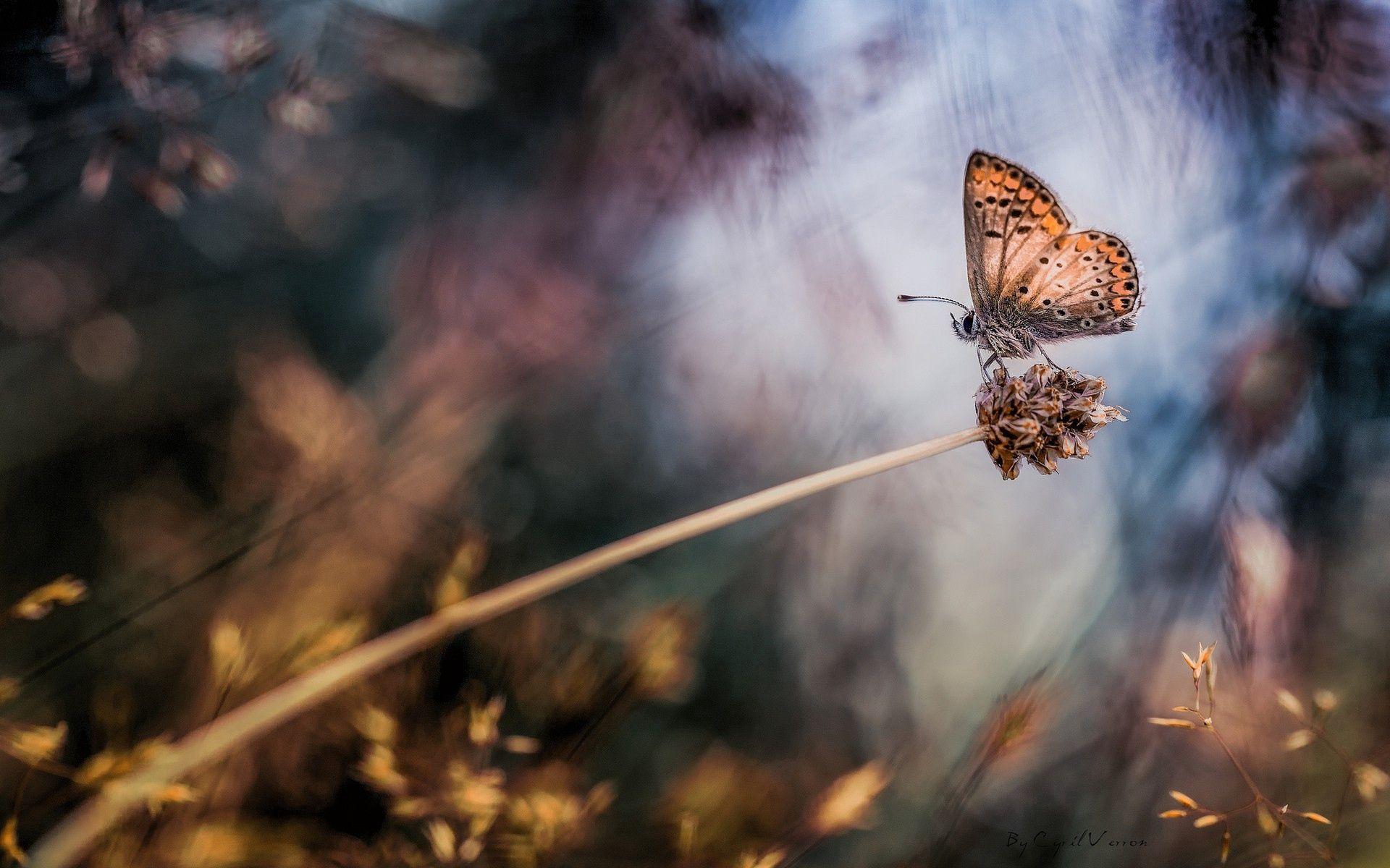 71096 скачать обои Макро, Бабочка, Трава, Блики, Пятна - заставки и картинки бесплатно