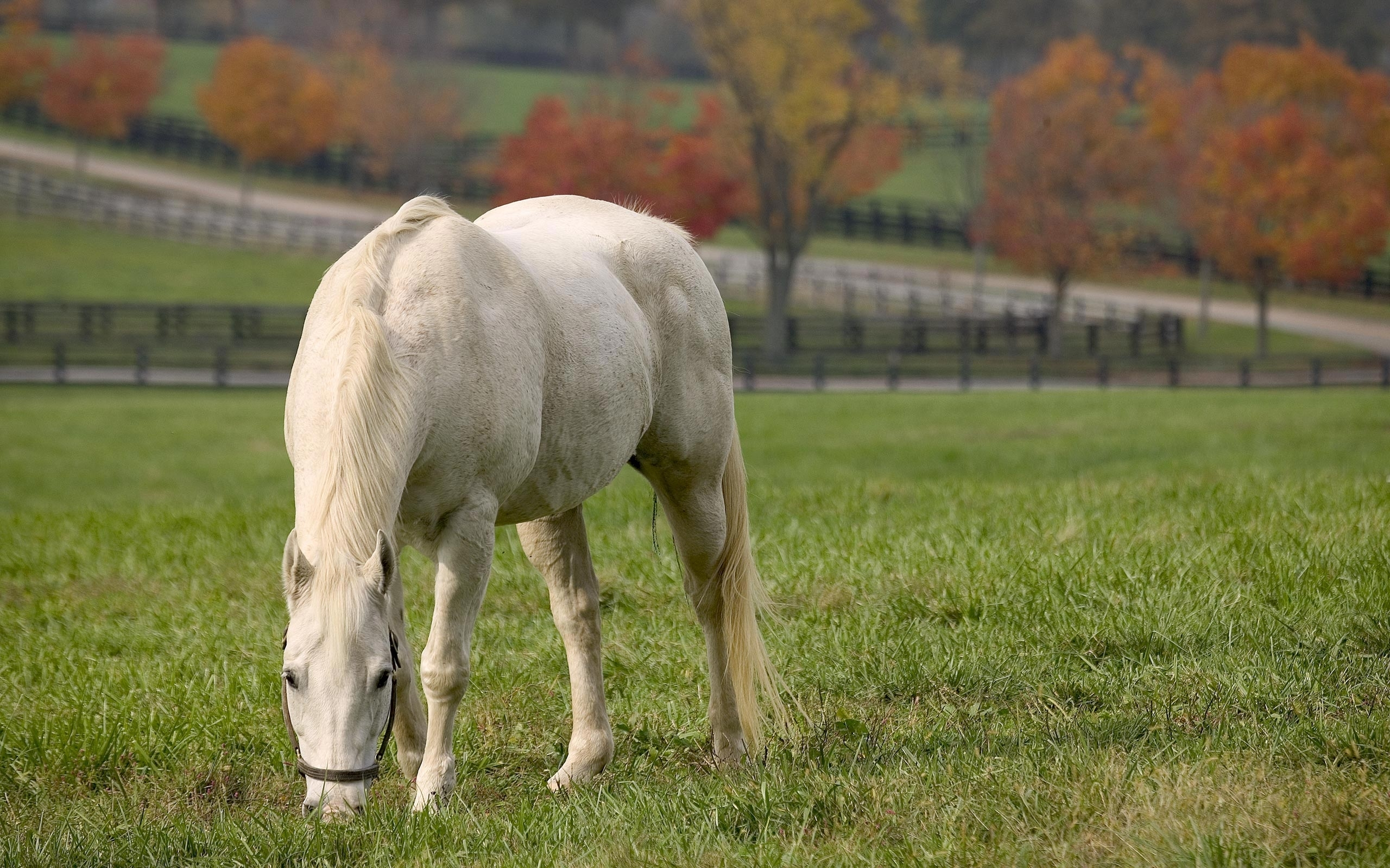 44885 download wallpaper Animals, Horses screensavers and pictures for free