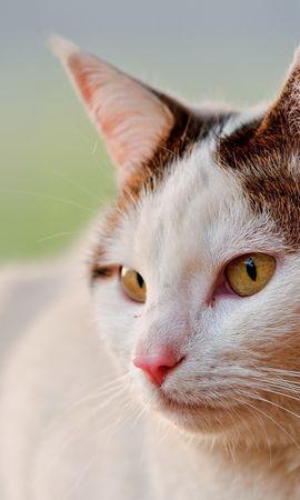25083 скачать обои Животные, Кошки (Коты, Котики) - заставки и картинки бесплатно