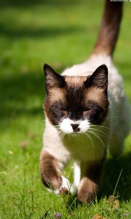 50254 скачать обои Животные, Кошки (Коты, Котики) - заставки и картинки бесплатно