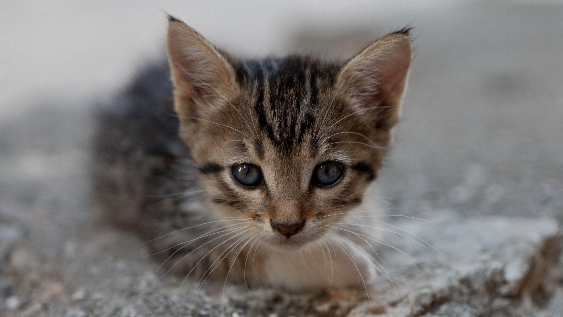 74682 download wallpaper Animals, Kitty, Kitten, Muzzle, Kid, Tot, Sight, Opinion screensavers and pictures for free