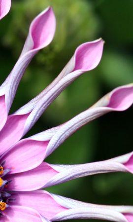 3703 descargar fondo de pantalla Plantas, Flores: protectores de pantalla e imágenes gratis