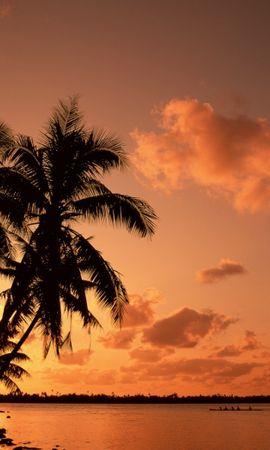 40365 télécharger le fond d'écran Paysage, Coucher De Soleil, Palms - économiseurs d'écran et images gratuitement