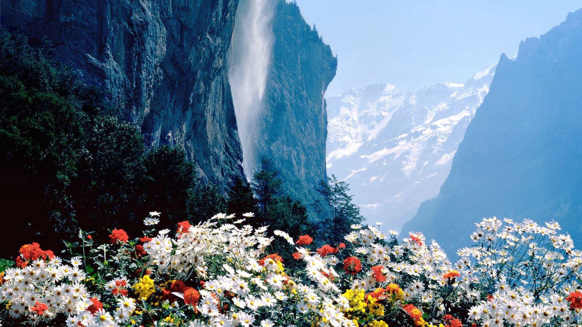 94469 télécharger le fond d'écran Nature, Se Rompre, Précipice, Montagnes, Fleurs - économiseurs d'écran et images gratuitement