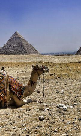 78460 скачать обои Животные, Верблюд, Пирамиды, Египет - заставки и картинки бесплатно