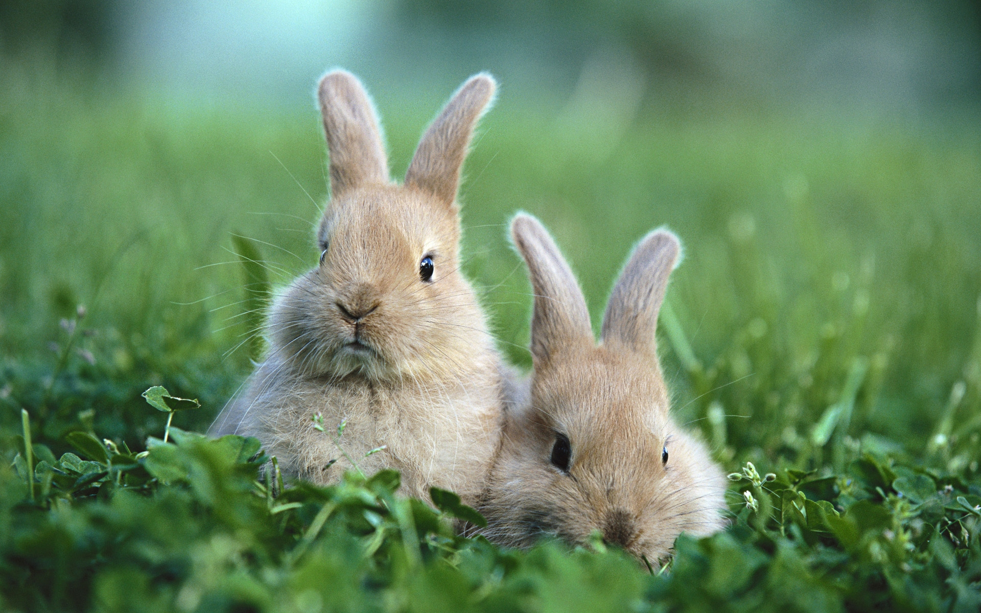 37871 Screensavers and Wallpapers Rabbits for phone. Download Animals, Rabbits pictures for free