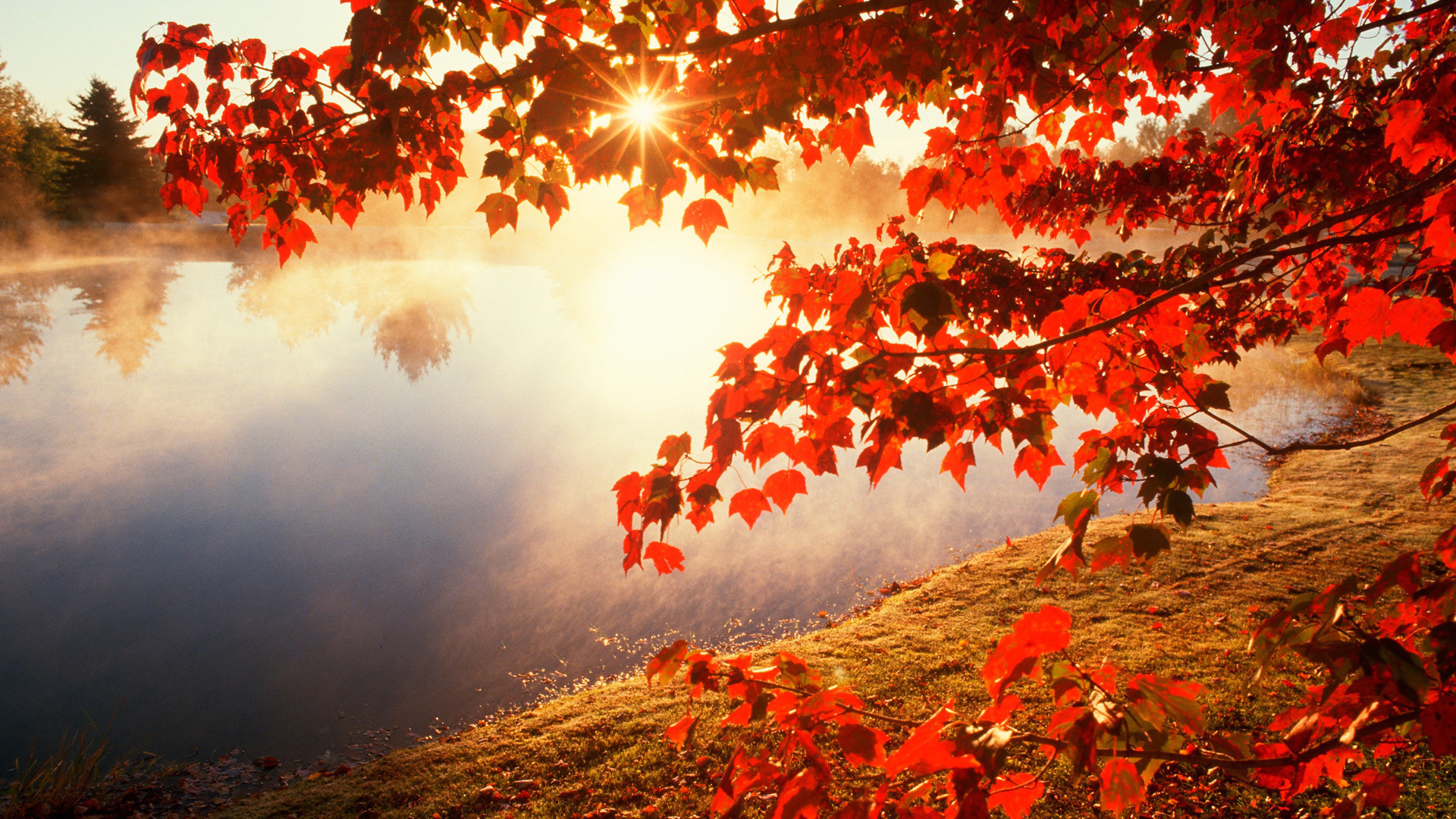 24789 Screensavers and Wallpapers Landscape for phone. Download Landscape, Rivers, Autumn, Leaves, Sun pictures for free