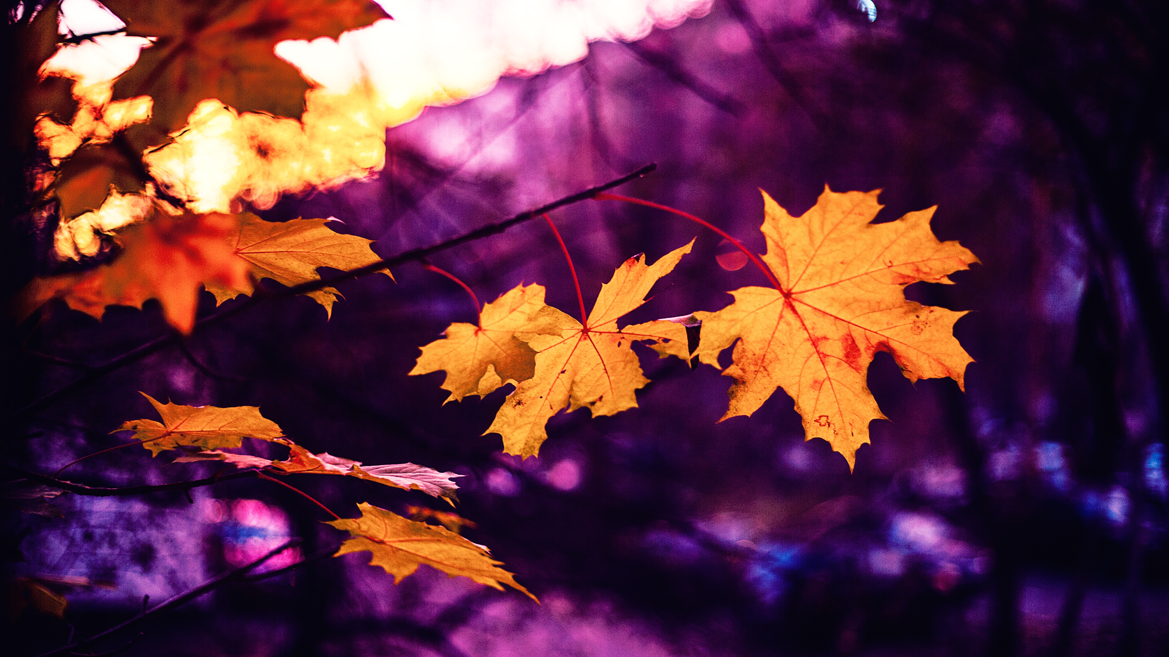 155008 download wallpaper Nature, Maple, Leaves, Autumn, Blur, Smooth screensavers and pictures for free