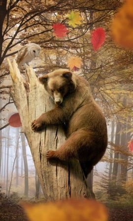 87560 download wallpaper Animals, Bear, Owl, Autumn, Leaves, Leaf Fall, Fall, Forest, Trees, Mashrooms screensavers and pictures for free