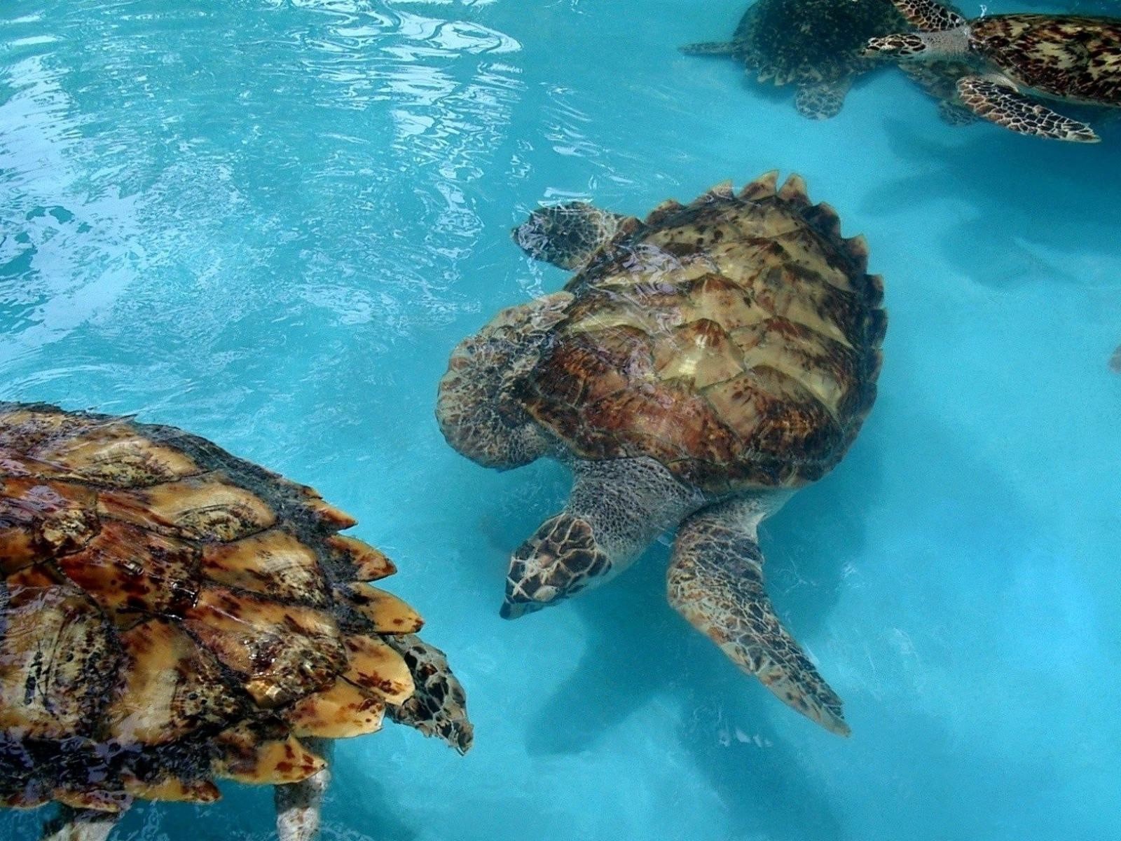 142153 download wallpaper Animals, Turtles, Sea, Family, Lot screensavers and pictures for free