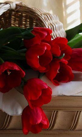 27821 télécharger le fond d'écran Plantes, Fleurs, Tulipes, Bouquets - économiseurs d'écran et images gratuitement