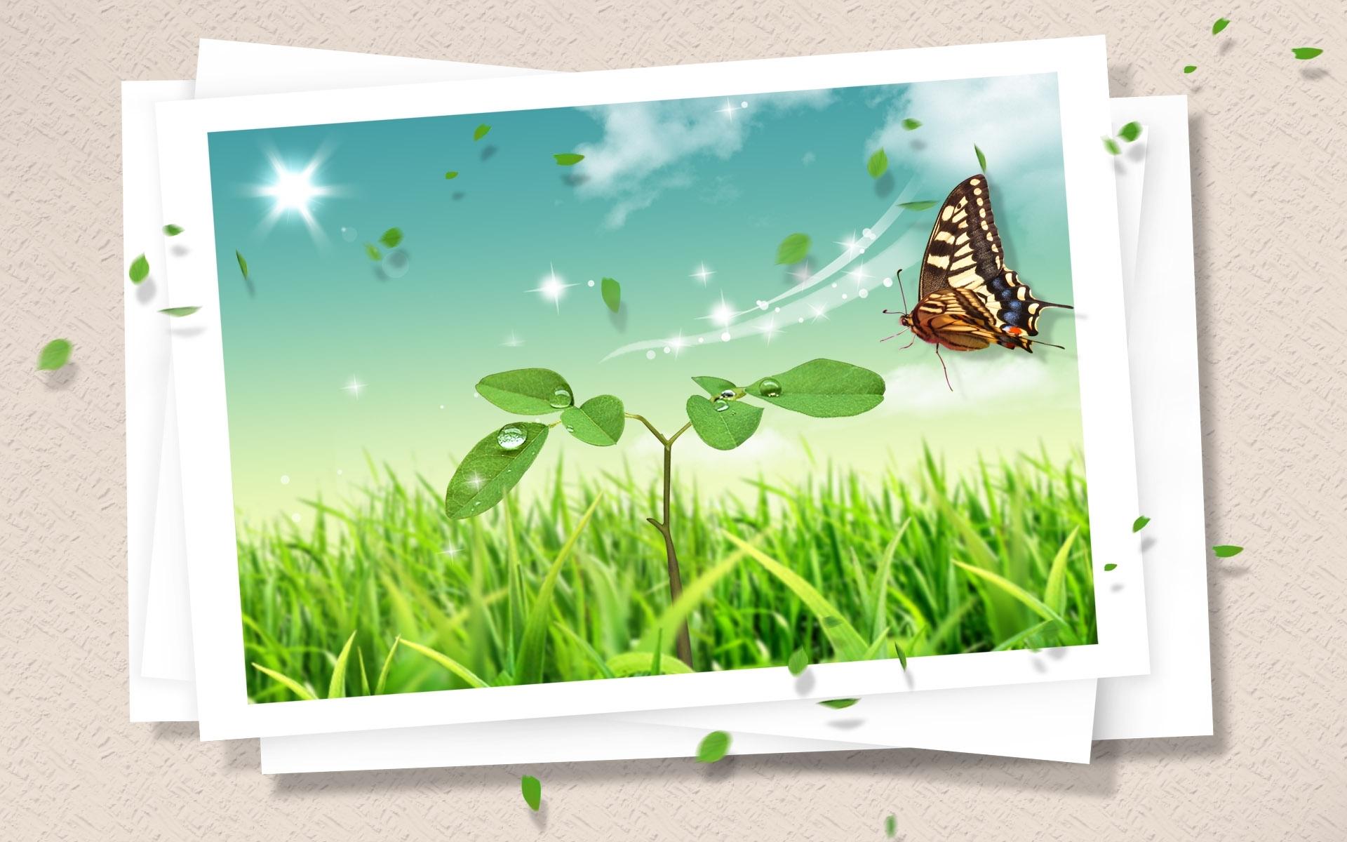 3162 скачать обои Растения, Бабочки, Трава, Насекомые - заставки и картинки бесплатно