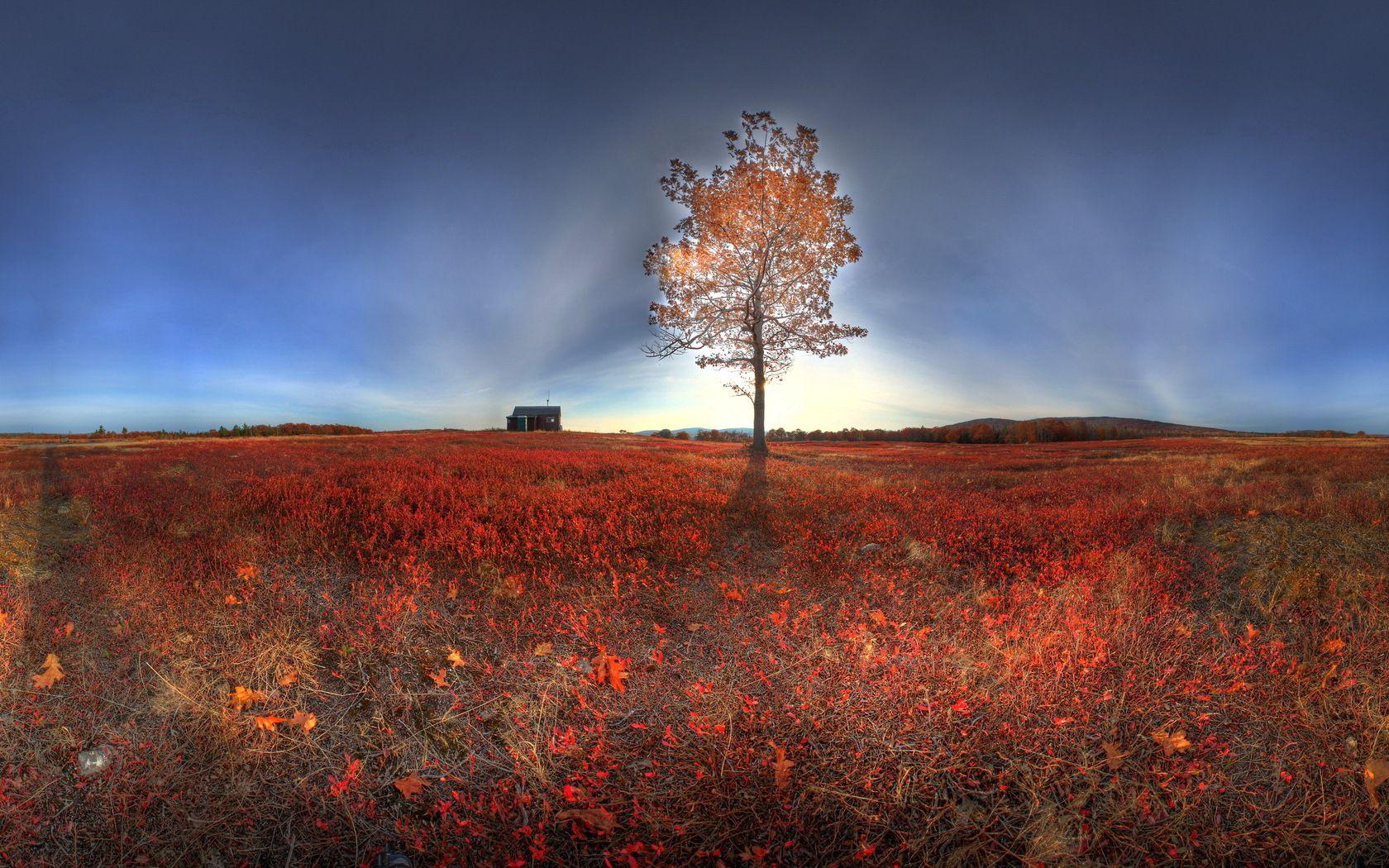 134769 Hintergrundbild herunterladen Landschaft, Natur, Herbst, Scheinen, Licht, Holz, Baum - Bildschirmschoner und Bilder kostenlos