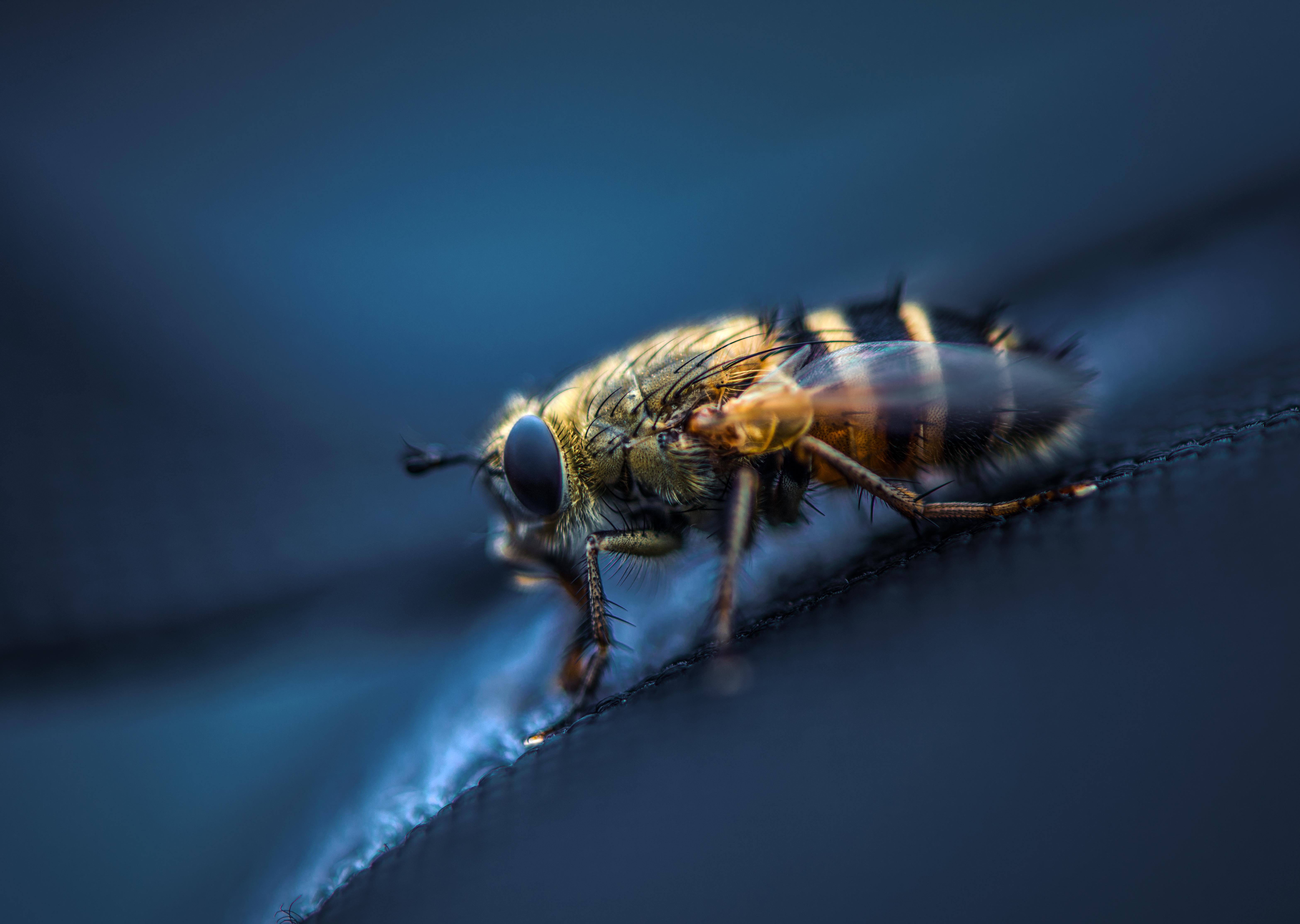 62231 Screensavers and Wallpapers Eyes for phone. Download Macro, Eyes, Insect, Wings, Fly pictures for free