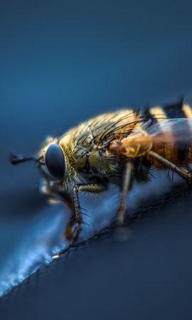 お使いの携帯電話の62231スクリーンセーバーと壁紙昆虫。 大きい, マクロ, 飛ぶ, 昆虫, 目, 翼の写真を無料でダウンロード