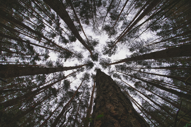 155900 скачать обои Природа, Лес, Деревья, Небо, Вид Снизу - заставки и картинки бесплатно