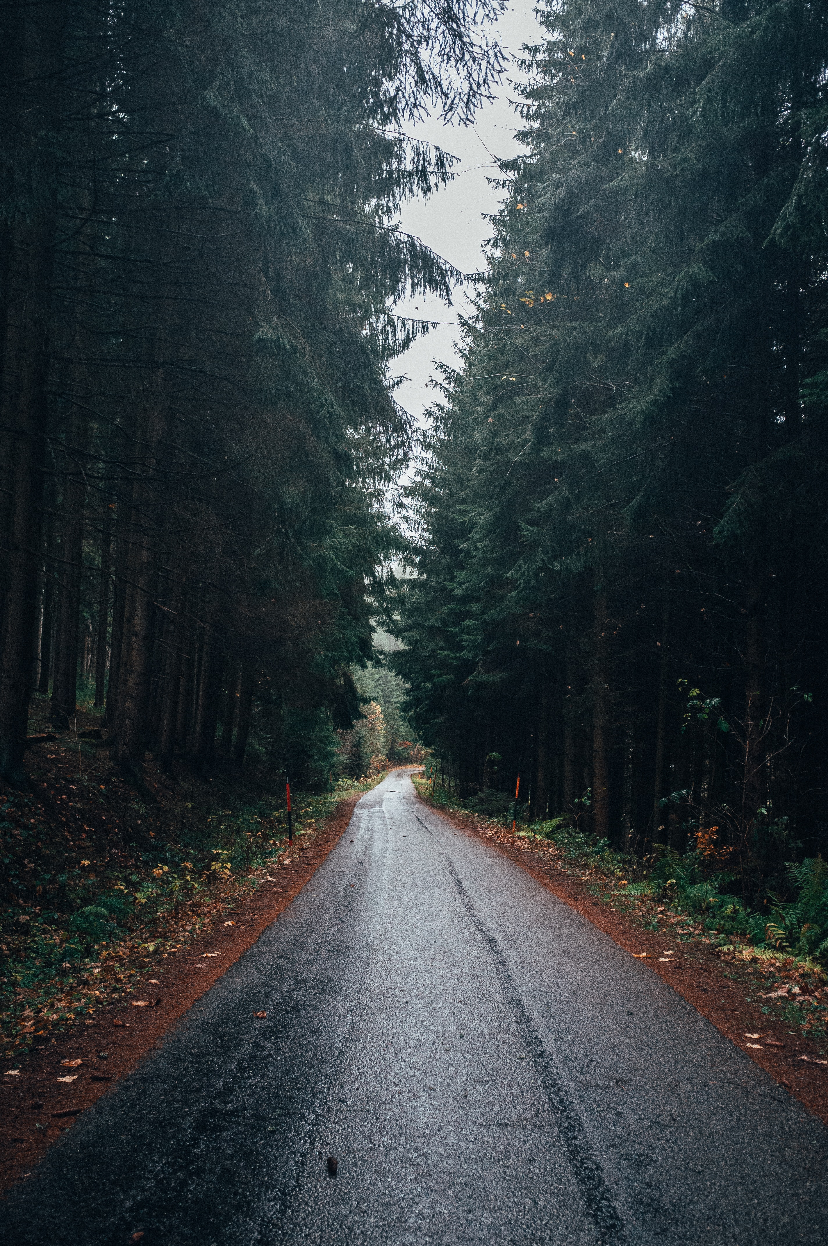 115370 Screensavers and Wallpapers Wet for phone. Download Nature, Trees, Road, Forest, Wet, Asphalt pictures for free