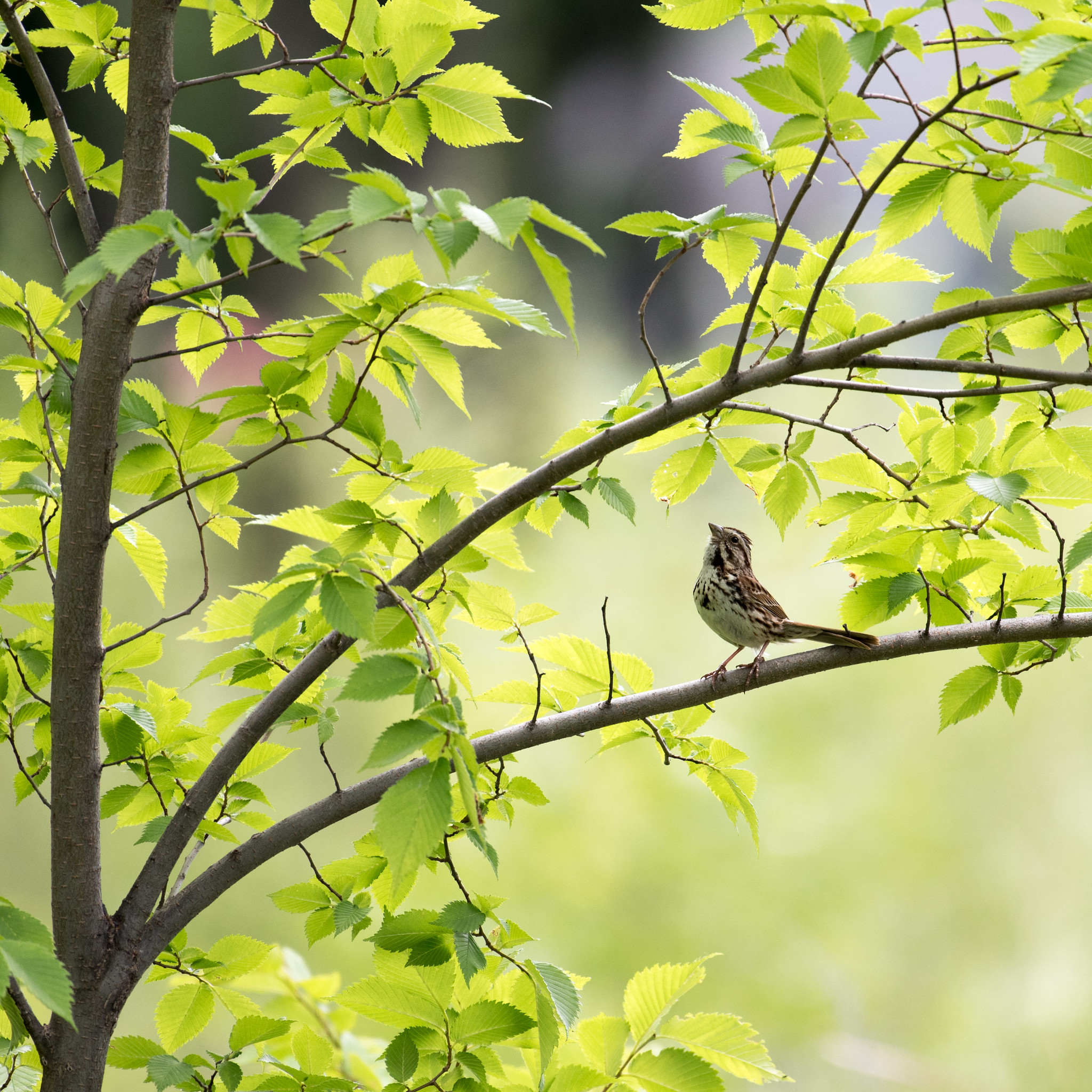 121478 free wallpaper 540x960 for phone, download images Animals, Leaves, Bird, Sparrow, Branch 540x960 for mobile