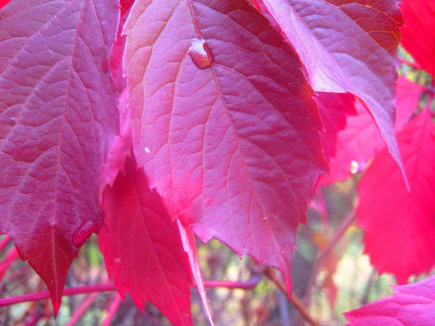 Handy-Wallpaper Pflanzen, Blätter kostenlos herunterladen.